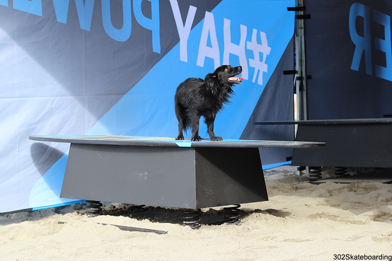 Canino Surfer