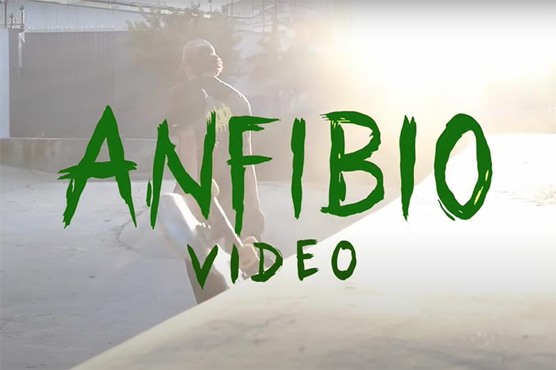 ANFIBIO VIDEO | LÚDICA